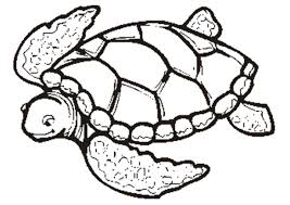 Coloring Pages Of Sea Turtles Wallpaper Download