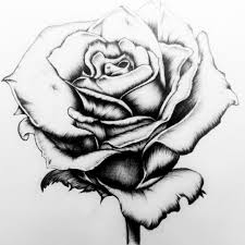 Rose Drawn Rome Fontanacountryinn Com