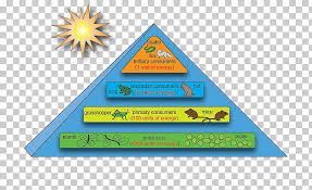 Ecosystem Pyramid Chart Energy Flow Ecosystem Ecological Pyramid Ecology Food Chain