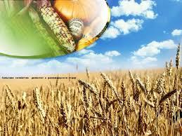 Книги про сельское хозяйство скачать Книгу скачать на моб Книги про сельское хозяйство скачать