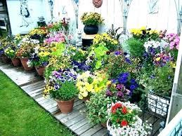 s outdoor flower pot arrangements for full sun