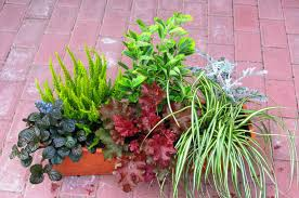Bepflanzter Balkonkasten 60 Cm Wintergr N Im Bew Sserungskasten