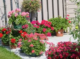 Small Picture Collection in Potted Plant Ideas For Patio Images Of Potted Plant