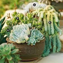 Download Succulent Pot Ideas  Solidaria GardenSucculent Container Garden Plans