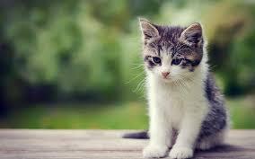 Cute Kitten Wallpapers on WallpaperDog