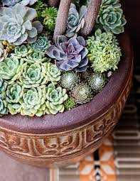 Under-plant with succulents