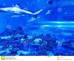 underwater water slide. Reda Poland Aquapark - Underwater Slide Tube With Sharks And Exotic Fish. Surrounding, Blue. Water