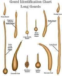Gourd Identification Chart Gourd Identification Chart Painted Gourds Gourds