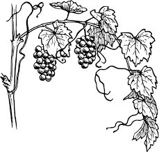 black and white grapes clipart.  Grapes Black And White Vine Clip Art  Grapevine  Vector  Online Royalty Free U0026 Public  Intended Black And White Grapes Clipart