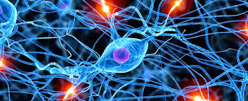 Image result for brain neurons