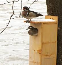 free duck house plans fresh wood duck house plans beautiful plans for small houses unique media