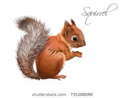 vector realistic ilration of little cute squirrel isolated on white background winter design element for