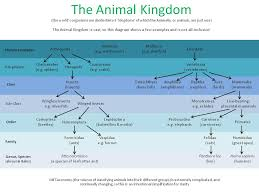 Animal Scientific Classification Chart Science
