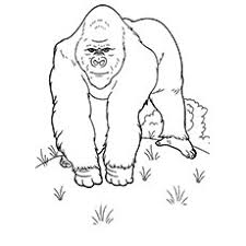 Animals Drawing For Colouring At Getdrawingscom Free For Personal