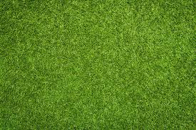 grass.  Grass Artificial Grass Stock Photo Inside Grass