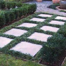 patio stones with grass in between. Delighful Stones Dwarf Mondo Grass Love It To Fill Between Pavers Apparently Takes A  Beating Too In Patio Stones With Grass Between Y