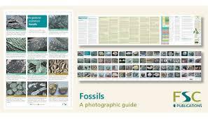 Fsc Fold Out Id Chart Fossils Identification Chart