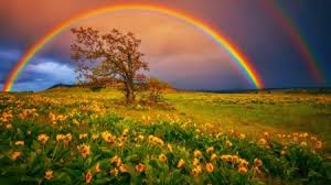 Rainbow In Springtime Rainbows Nature Background Wallpapers On