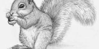 Disegni A Matita Di Animali Io Disegno Tutto Ciò Che Etsy