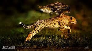 cheetah wallpaper hd 1080p for desktop