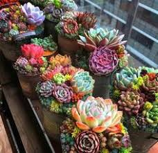 Types of Succulents; chubby, spikey, textured, smooth | <b>gardening</b> ...