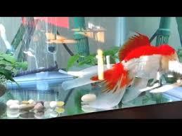 petco goldfish.  Goldfish Petco Dollar Per Gallon Sale 2012 In Goldfish