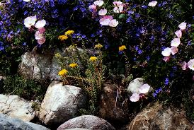 Small Picture Flowers And Plants For Rock Gardens How To Design A Rock Garden