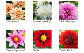 names discover new inspirations wedding flower types with wedding flowers dahlias woman getting
