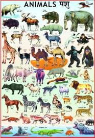 Animals Chart For Children Paper Print