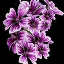 Brandy Drawdy Obituary - Visitation & Funeral Information