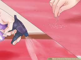 image titled remove pet urine from carpet step 18