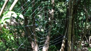 How To Make A Giant Spider Web Weave A Giant Frightful Spider Web For Halloween Make