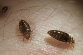 37+ Do Bed Bugs Jump From Person To Person Pictures