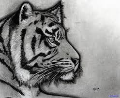 easy tiger pencil drawing. Wonderful Pencil Easy Tiger Pencil Drawing  Photo5 Throughout Tiger Pencil Drawing L