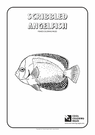 Small Picture Angelfish Pictures To Color Coloring Coloring Pages