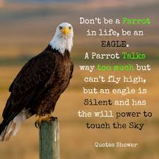 Dont Be A Parrot In Life Be An Eagle A Parrot Talks Way Too Much