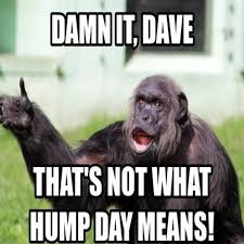 Funny Hump Day Quotes Magnificent Hump Day Memes 48 Hump Day Meme Funny Dirty Hump Day Memes Clean
