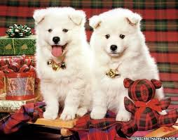 cute merry christmas wallpaper dogs. Perfect Dogs Christmas Puppies And Cute Merry Wallpaper Dogs