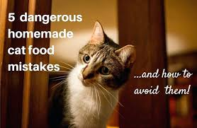 non prescription low phosphorus cat food. Avoid These Homemade Mistakes Urinary Cat Food Non Prescription Substitute 5 Dangerous How To Them . Black And White Kitty Wet Canned Low Phosphorus