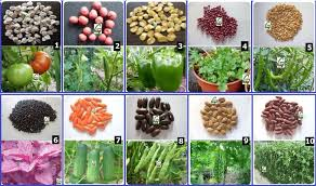 Kitchen Garden Plants Seeds Vegetable Garden