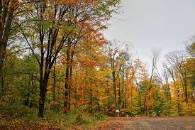Image result for 하이파크의 가을 풍경