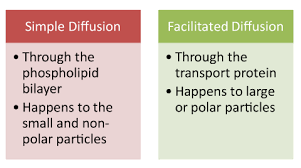 Diffusion And Osmosis Venn Diagram Similarities And Differences Between Simple Diffusion And