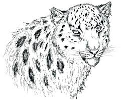 Printable Snow Leopard Coloring Page Pages Pencil Sketch Cub Pag