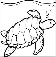 Small Picture Swimming Turtle Coloring Page Turtle Printable coloring sheets