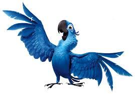 Картинки по запросу рио попугай маленький