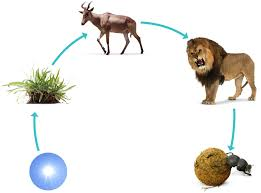 animal food chain for kids.  Food Food Chain Look V0zbb6 Throughout Animal Chain For Kids DK Find Out