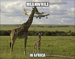 Meanwhile in Africa - WHAT'S MEME ? via Relatably.com