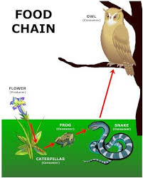 animal food chain for kids. Plain Food In Animal Food Chain For Kids