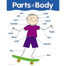 Human Body Parts Chart In English Free Parts Of The Body Download Free Clip Art Free Clip