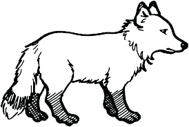 Arctic Fox Coloring Page Pages Within 5 Animals Animal Jam Yoloerco